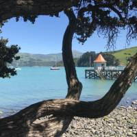 A great place for a gentle stroll before or after your walk, down to the Akaroa Jetty | Janet Oldham