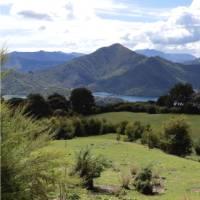 In amongst the beautiful scenery, horses graze | Kaye Wilson