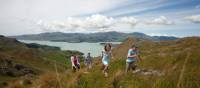 Family walking on the Port Hills | ChristchurchNZ