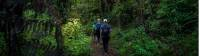 Walkers enjoy the lush, green forest trails along the Nydia Track |  <i>MarlboroughNZ</i>