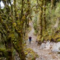 Hopefully no goblins end up jumping out of Goblin Forest |  <i>Jase Blair (Tourism New Zealand)</i>