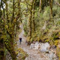 Hopefully no goblins end up jumping out of Goblin Forest   Jase Blair (Tourism New Zealand)