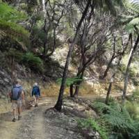 Plenty of space to walk at your pace along the Queen Charlotte track   Kaye Wilson