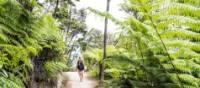 Enjoying the solitude of the Abel Tasman Coast Track | abeltasman.com