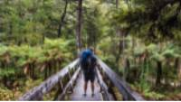 Bridge crossing on the Abel Tasman Coast Track |  <i>Tamzin Henderson</i>