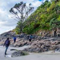 Rock hopping along the Waiheke coastline   Terra and Tide