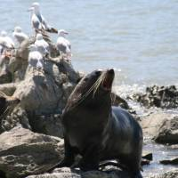 Some of the friendly locals basking in the Kaikoura sunshine   Janet Oldham