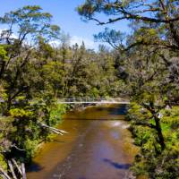 The Paparoa Track features a number of swing bridges   Jase Blair (Tourism New Zealand)