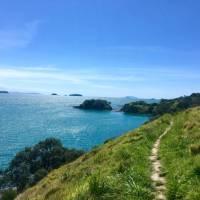 Parts of the Te Ara Hura are a narrow track along the cliffs edge | Jil Beckmann