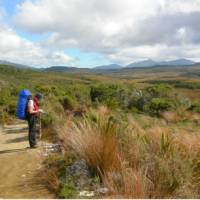 A walker stops amidst tussockland on the Heaphy Track.   Janet Oldham