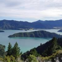 Views over Kenepuru Sound from Torea Saddle | Kaye Wilson